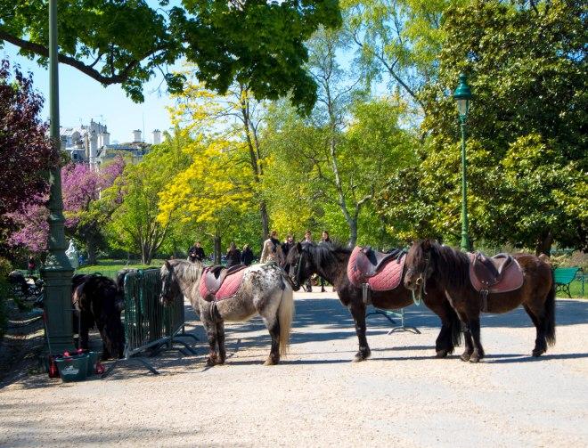 monceau ponies (1 of 1)